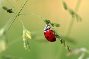 ladybug on plant
